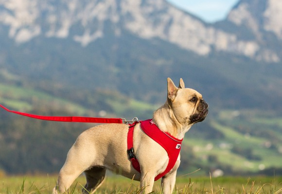 Curli - uniwersalne szelki dla każdego psa